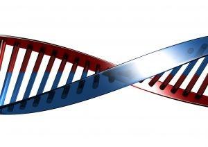 Gene und Übergewicht - Der wissenschaftliche Beweis