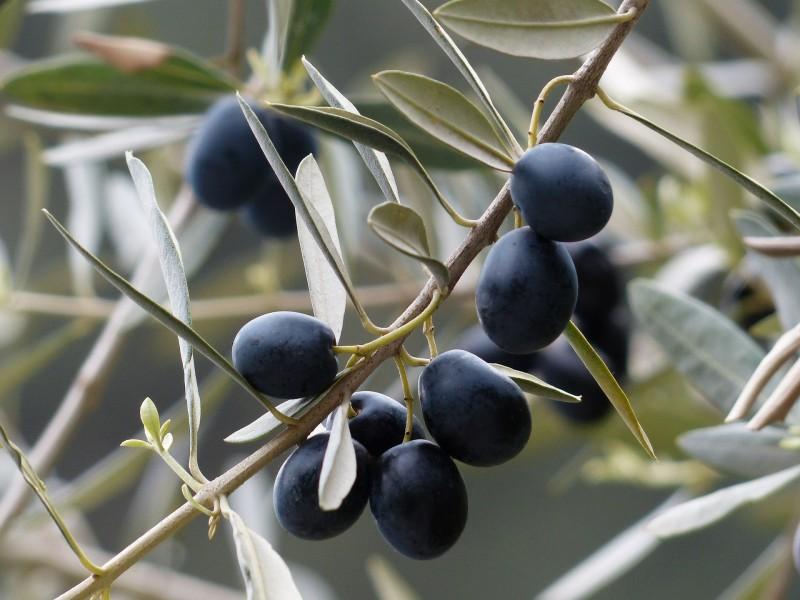 schwarze Oliven