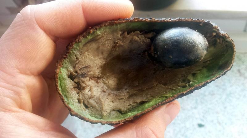 Überreife und schlechte Hass-Avocado