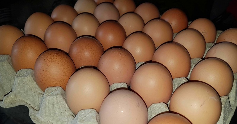Kann man Eier einfrieren?